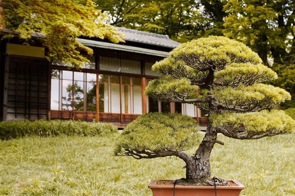 Meiji Shrine Inner Garden, Tokyo