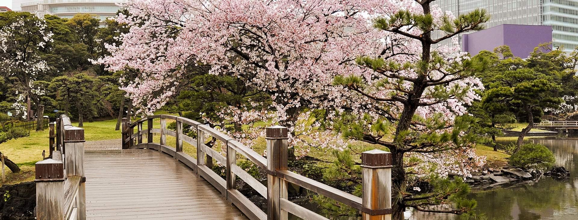 Boka en resa till Japan med flyg och hotell
