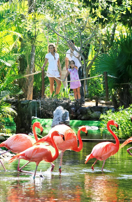 Flamingos på Grand Palladium Colonial Resort & Spa