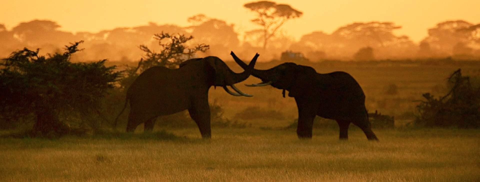 Boka en resa till solsäkra Afrika med Ving