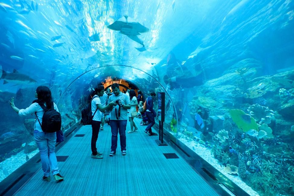Dubai Aquarium & Underwater Zoo, The Dubai Mall