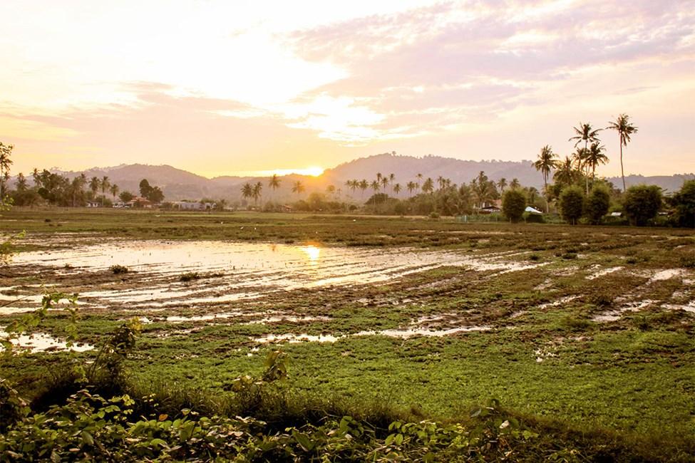 Naturen i Langkawi