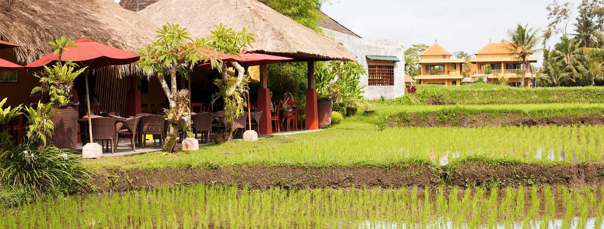 Resor till Ubud på Bali i Indonesien