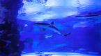 Antalya Aquarium - kan bokas hemifrån