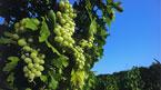 Cyperns pärlor, det bästa av Troodosbergen – kan bokas hemifrån